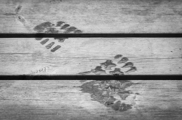 tracing-footsteps